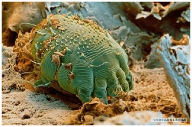 черви в коже человека на лице