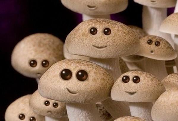 Прикольные картинки грибы