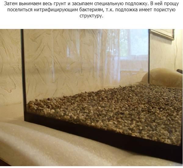 Запуск аквариума 72 литра