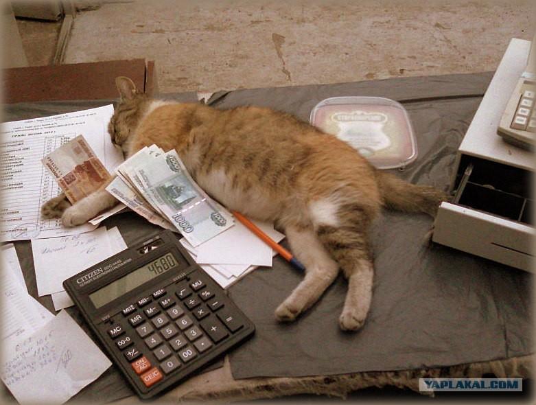 Смешные картинки бухгалтера в работе, картинки прикольные