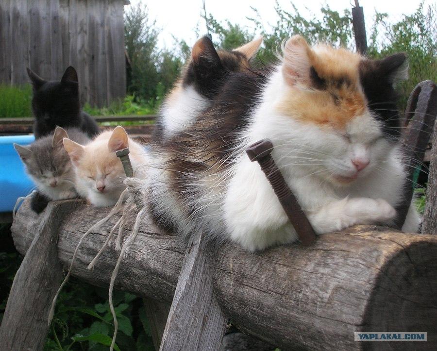 Котята в деревне фото сестрой