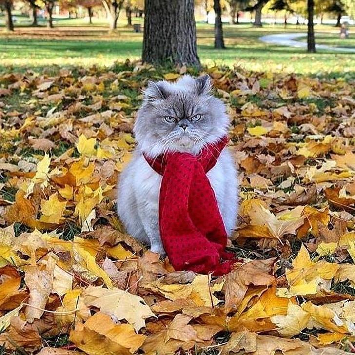 общем картинки про осень очень смешные сияешь словно солнце