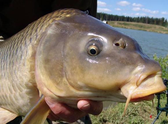 """Чувашия. Рыбалка на """"платнике"""" июнь 2014 - ЯПлакалъ"""