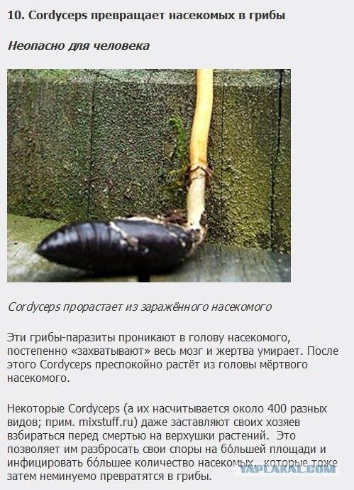 от каких паразитов появляются папилломы
