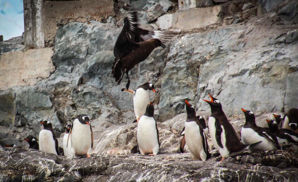 pingvini-ebutsya-foto