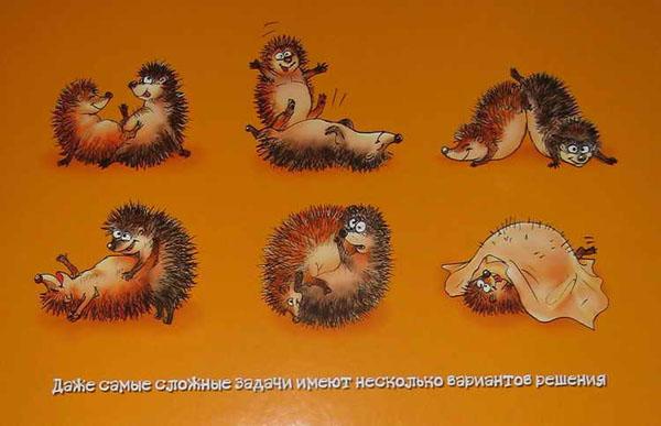фото как размножаются ежики