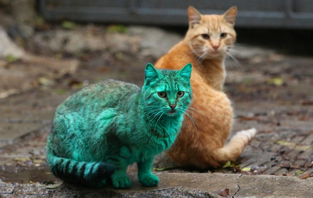 Юкка коты