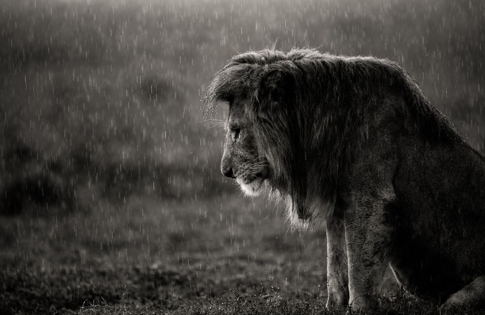картинки отчаяния животных самому сделать