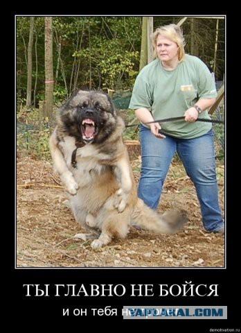 Взбесили. Собаководы недальновидные.