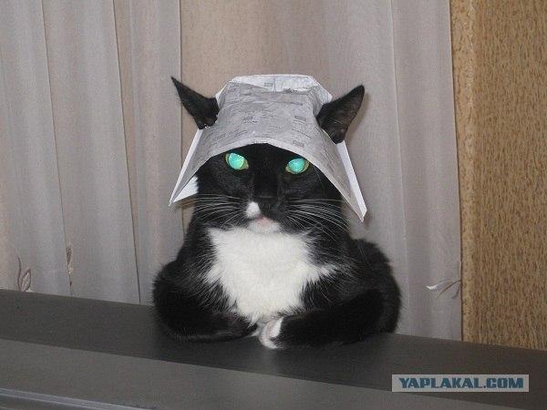 Кот с фольгой на голове