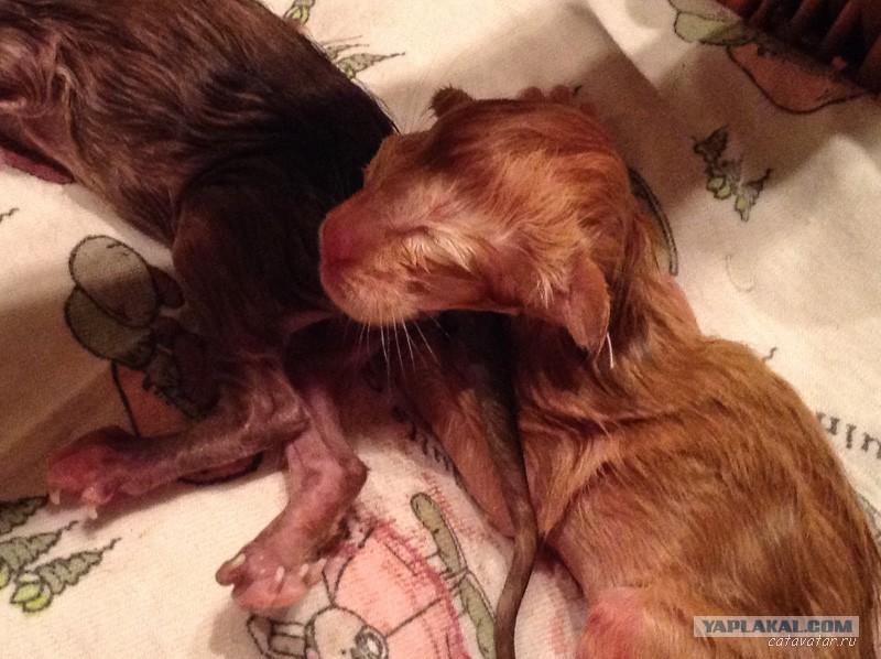 сонник родить кошку это
