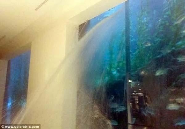 протечка аквариума фото что