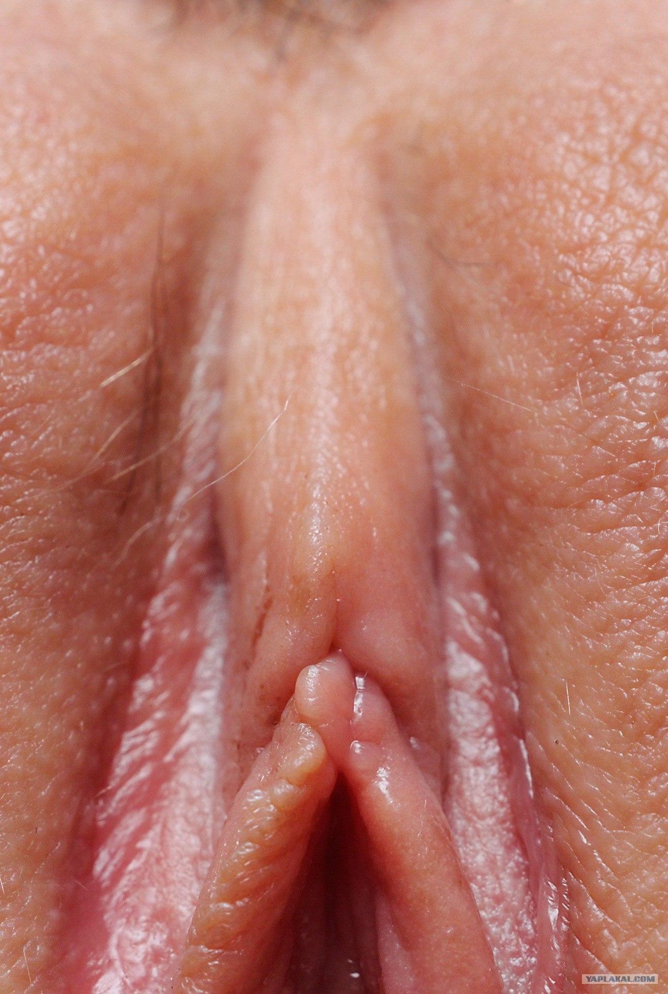 Женские половые органы клитор - Онлайн 18+ ролики для несомненных ...