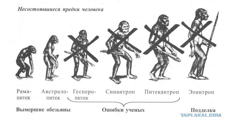 наиболее древняя теория происхождения человека-эволюционная
