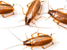 Тараканы в пизде — img 5