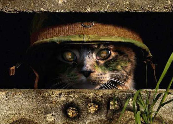 4517342 Коты на службе Отечества