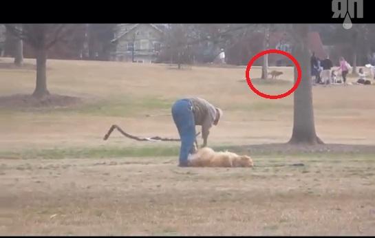 Собака с прогулки уходить не хотяка