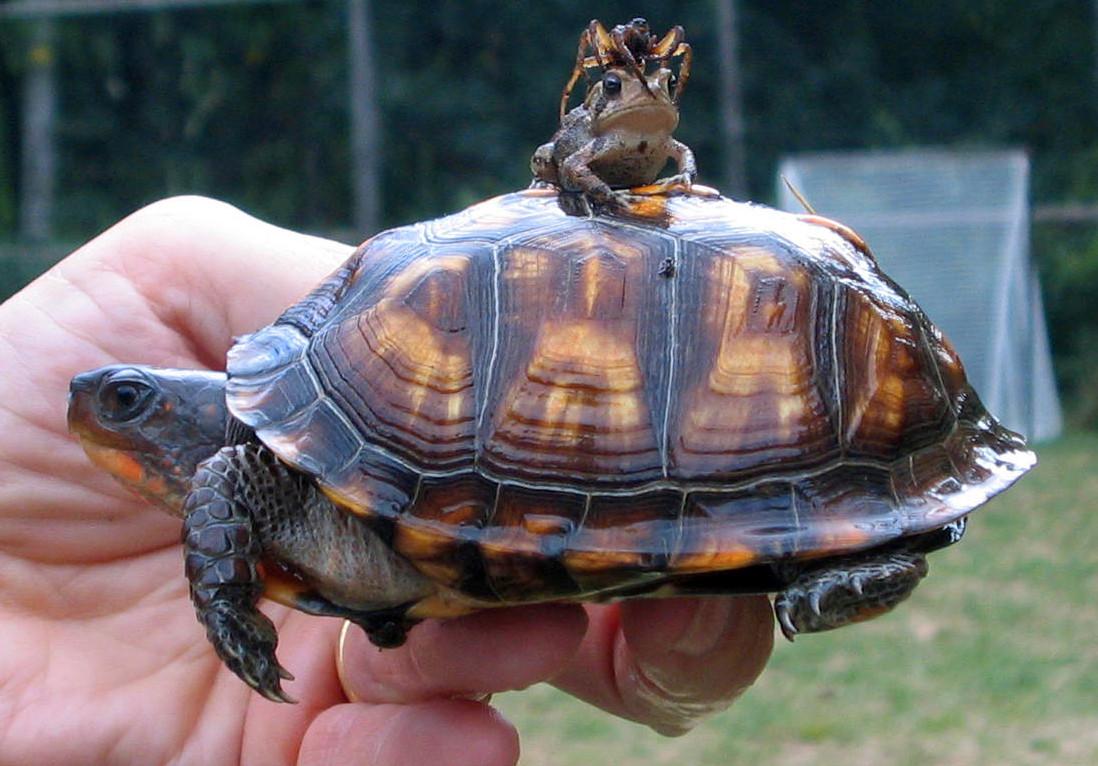 Пожеланиями новоселье, картинки прикольные черепах