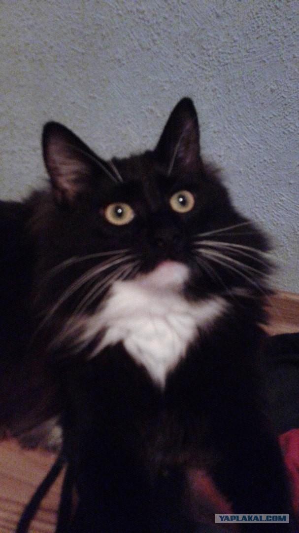 Чёрный и белый коты на двоих