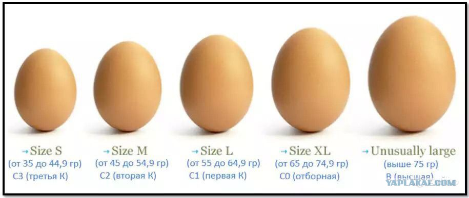 Огромные мужские яйца 4