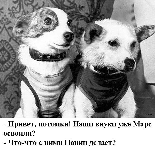 Панин vs пёсик