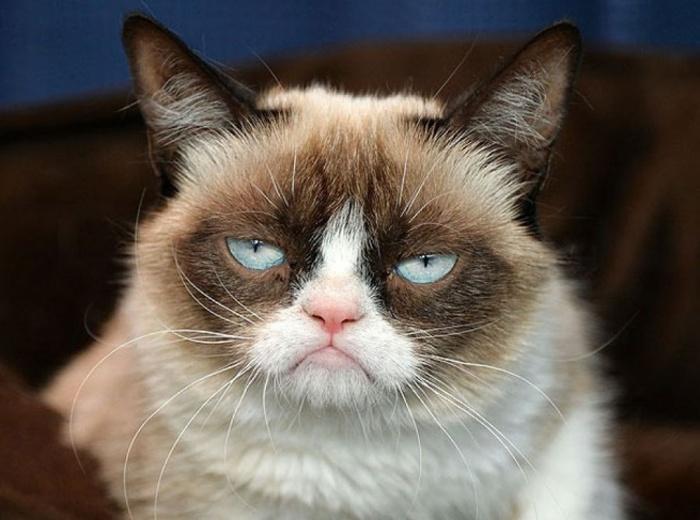 картинки забавные коты