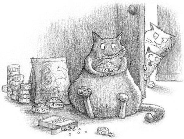 Картинки, рисунки карандашом кошки смешные