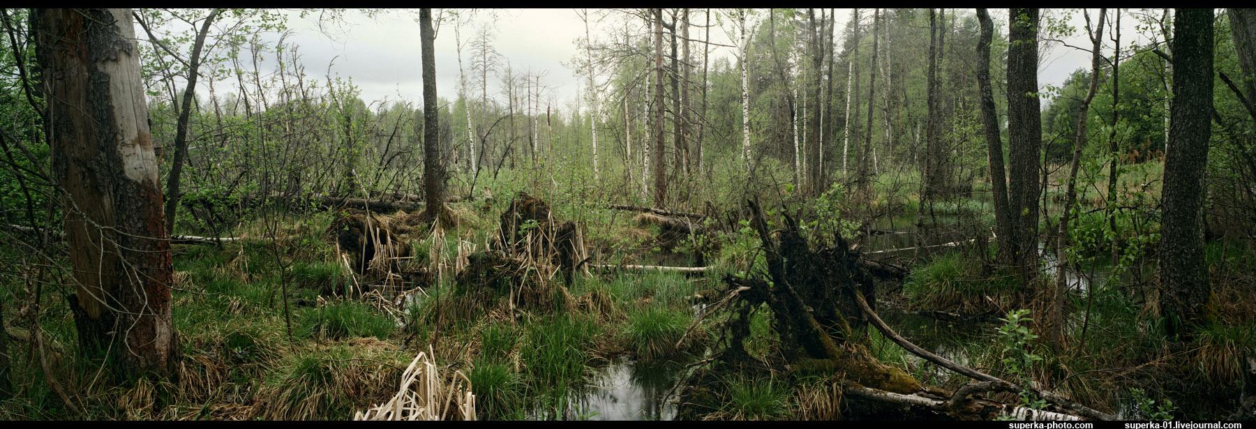 три юрское болото картинки нервный тик