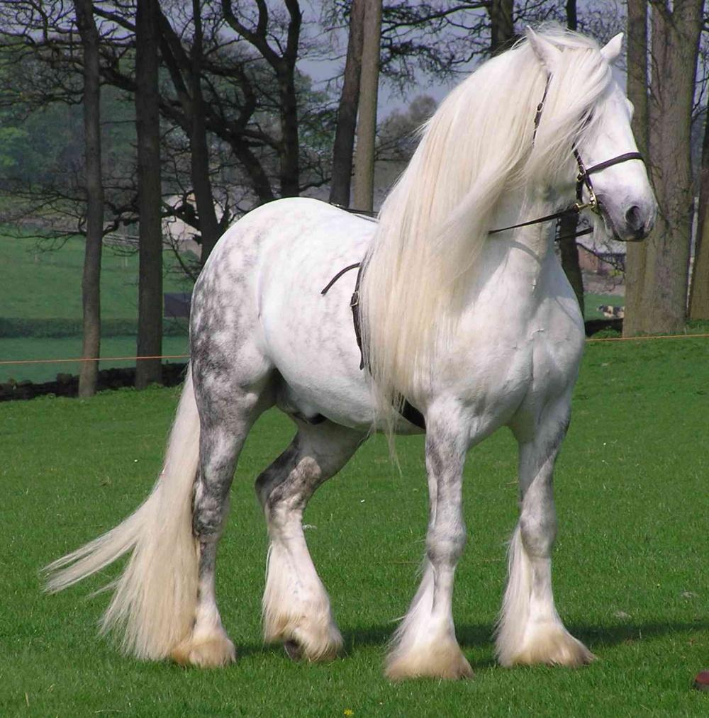 породы фото лошади