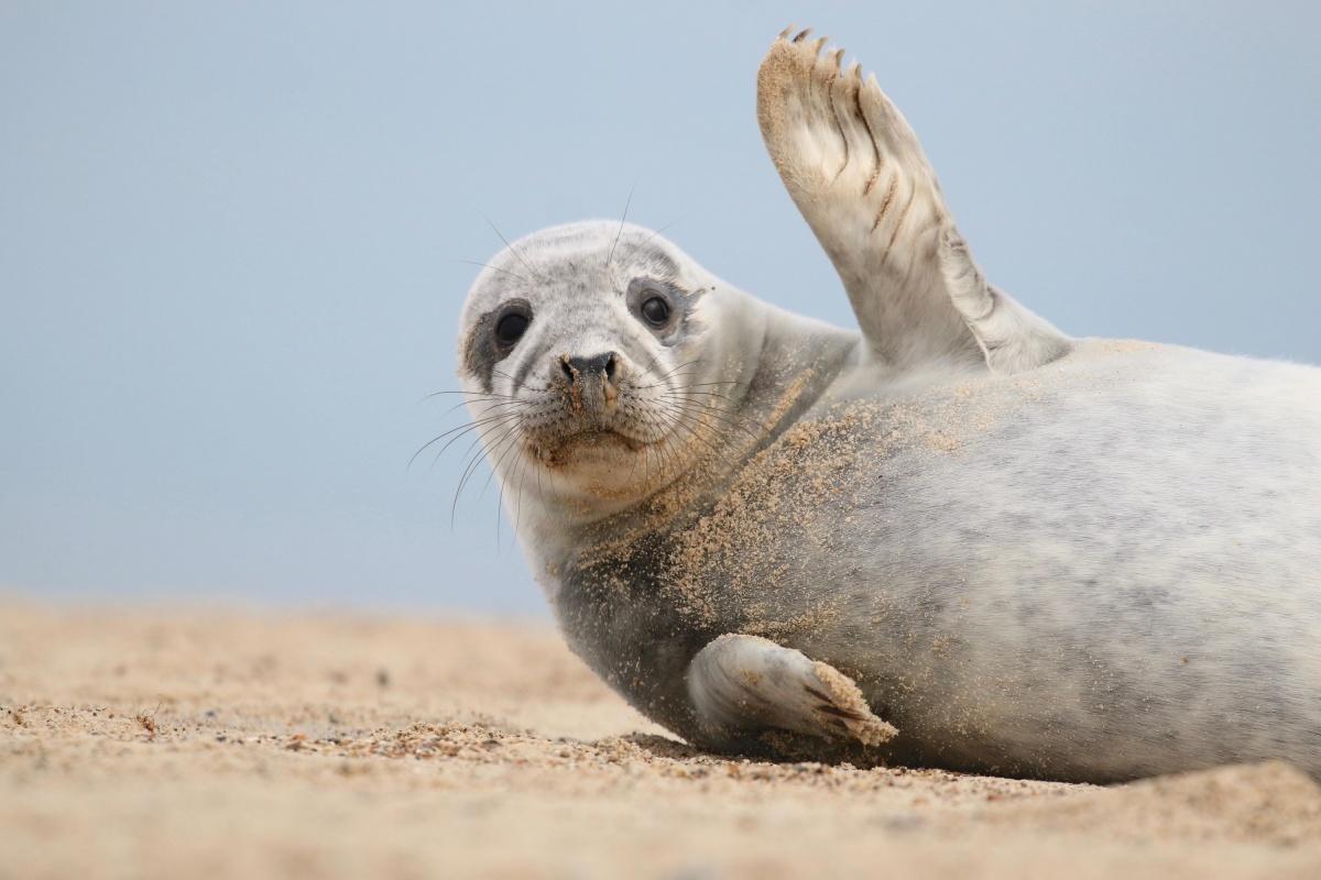считаем тюлень фото картинки прикольные вашему вниманию яркую