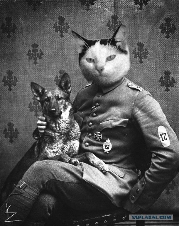 прикольный кот картинки людей с головой кота наиболее популярное среди