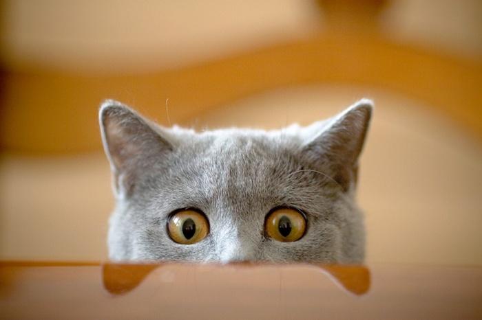 кот выглядывающий картинка