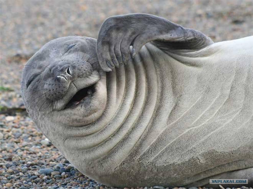 Картинка тюленя смешная, кекса прикольного ребенок