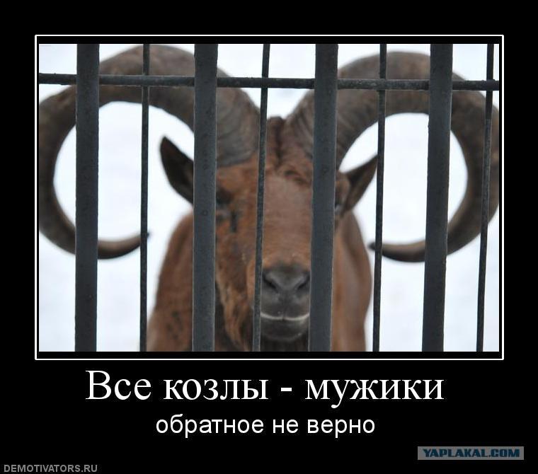 Смешная картинка все мужики козлы, животными смешными