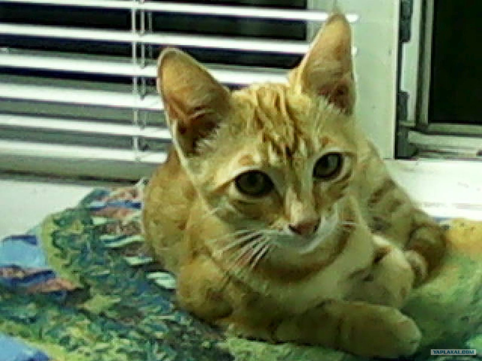 Бездомный кот урод