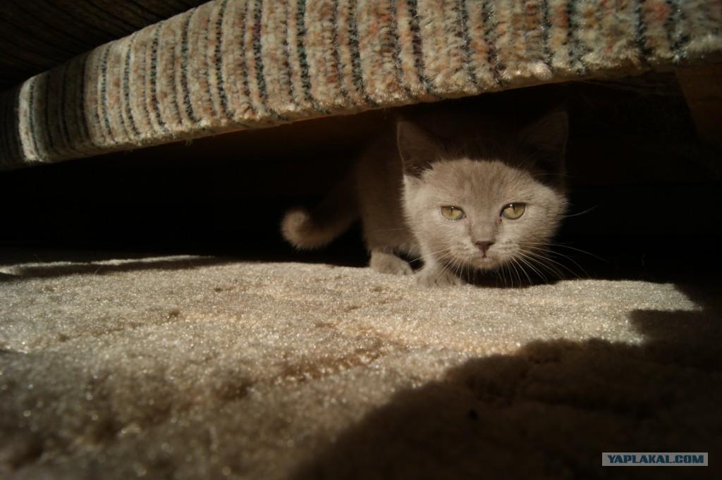 Кот весь день прячется
