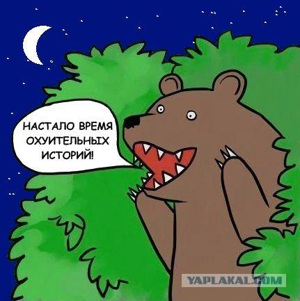 Гифки Медведь Кричит Шлюха