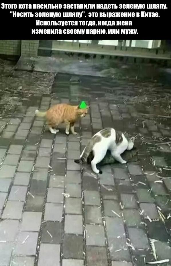 """""""Зелёная шляпа"""""""