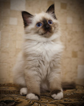 Омский пес Ватсон нашел и спас замерзающих котят