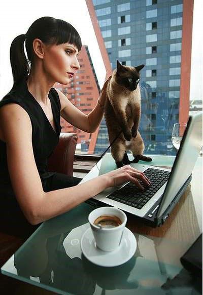 Когда кота тянет к знаниям.