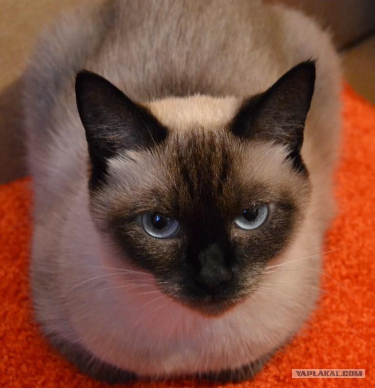 Известные клички котам