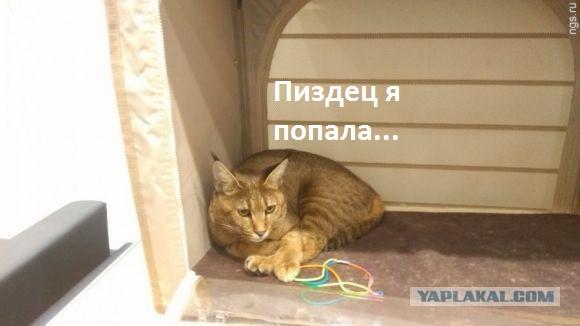 Жительница Барнаула продала автомобиль, чтобы купить кошку за миллион