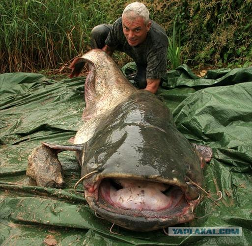 рыбы монстры фото