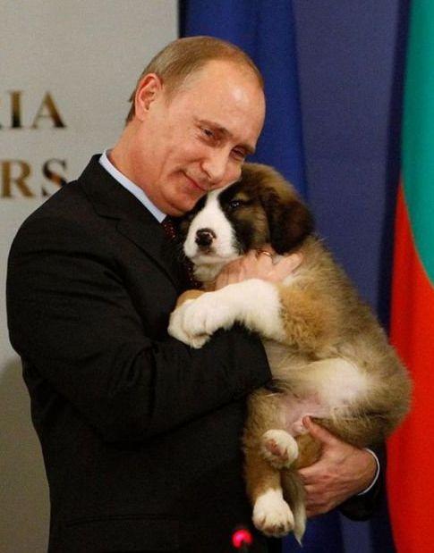 Диссертацию Путина объявили плагиатом ЯПлакалъ Диссертацию Путина объявили плагиатом