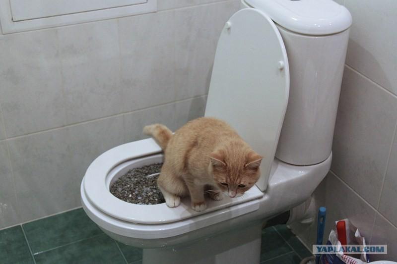 Лоток для унитаза для котов