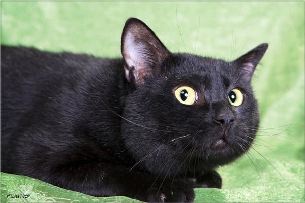 Картинка черный кот с надписью