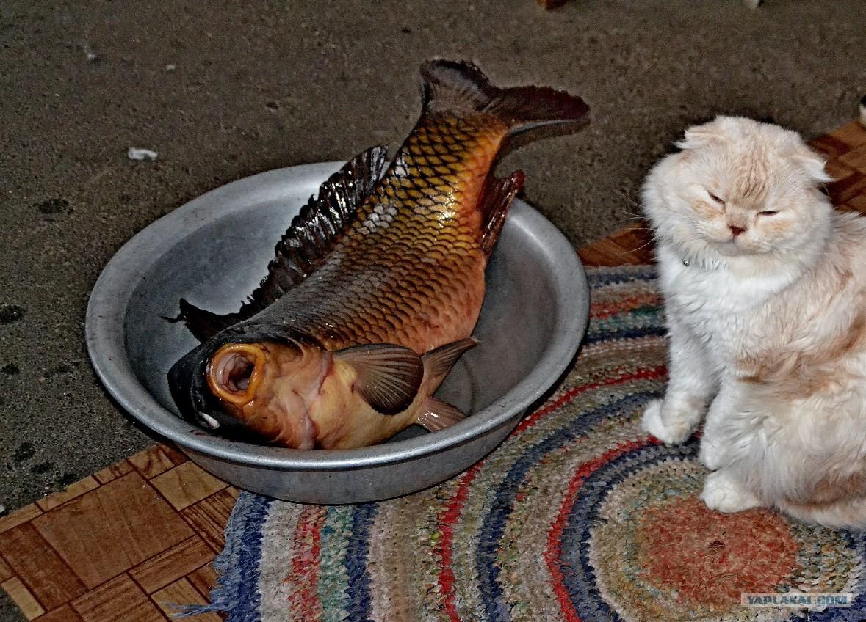Рыбка моя смешные картинки