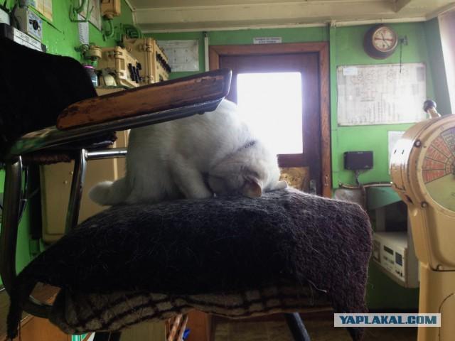 Потрясающая история о коте, который стал настоящей звездой на борту корабля