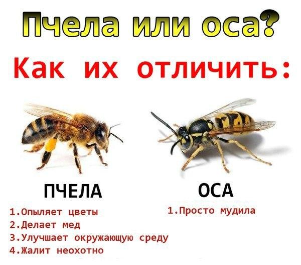 аллергия на пыльцу название