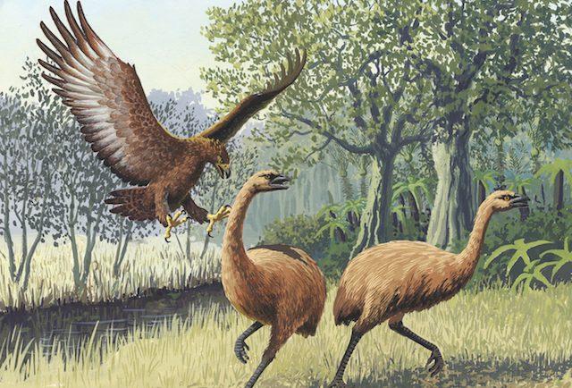 a case study of australia s megafauna